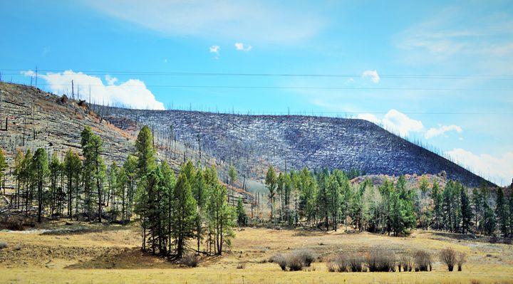 Burnt Forest - jammer66