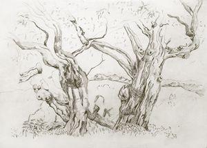 Eucalyptus tree - peter menne