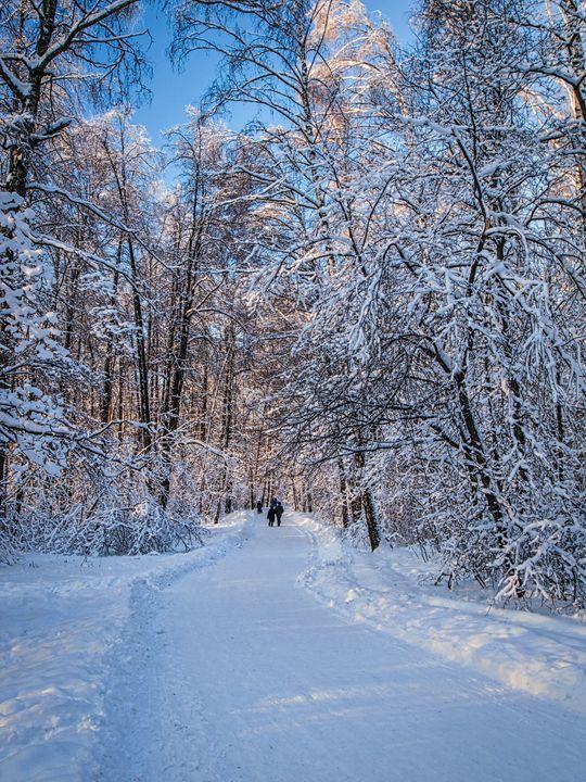 winter road - Michael K Photography