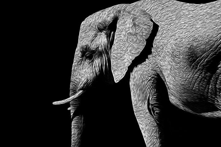 Elephant - Christine Mitchell