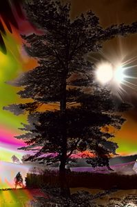 Aurora tree 2