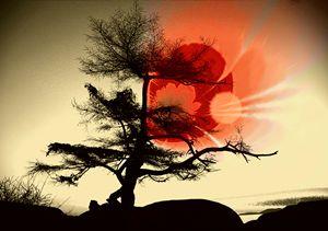Tree Blossom - Elaine Hunter