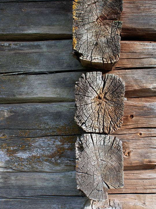 Log Wall 2 - Art KalleCat