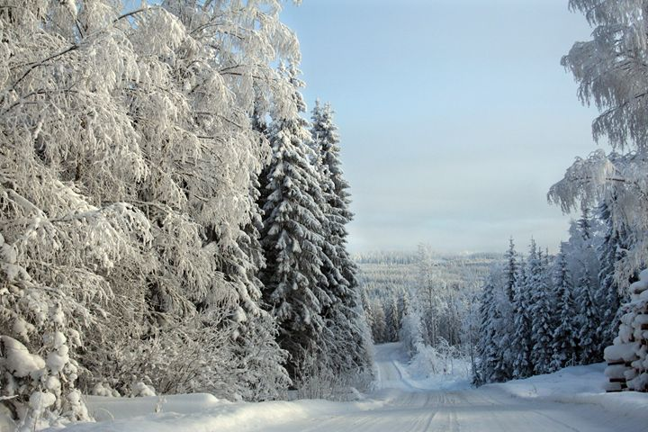 Snow Forest and Road - Art KalleCat