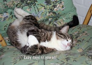 Kitty's Lazy Days