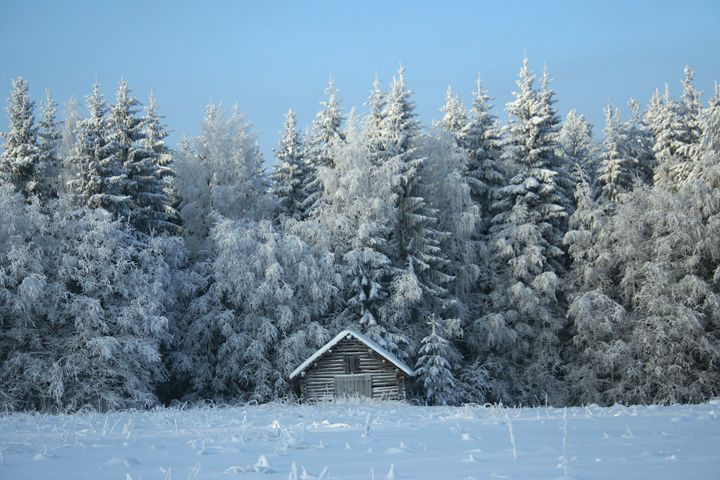Snow Forest and Hay Barn - Art KalleCat