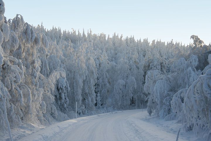 Snow Forest - Snow Road - Art KalleCat