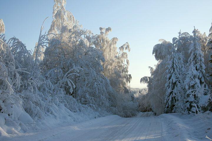 Snow Road - Art KalleCat