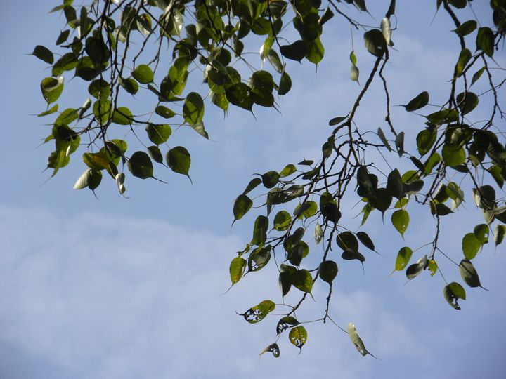 Leaves in the breeze - Sindhu's Paintings