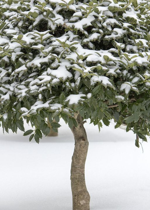 Lott Tree - KBalevre