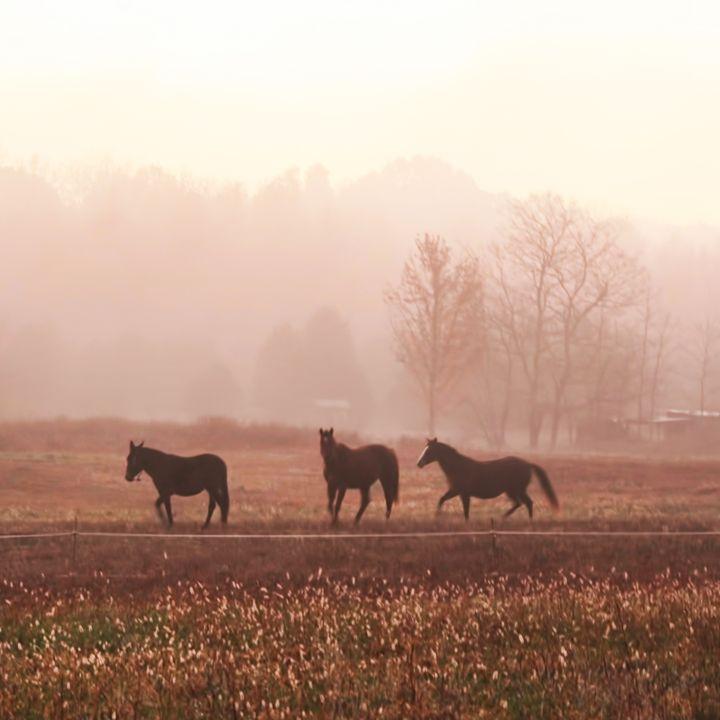 Sangho horses - KBalevre