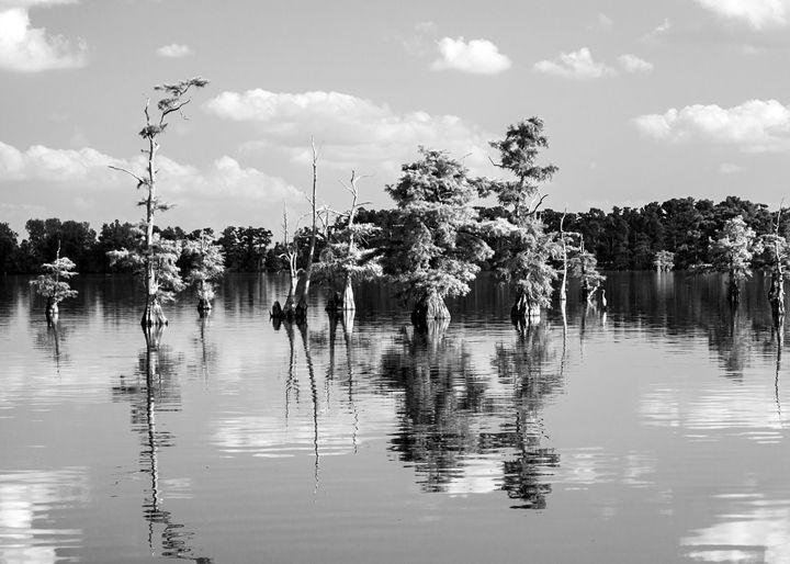 Reelfoot Lake - KBalevre