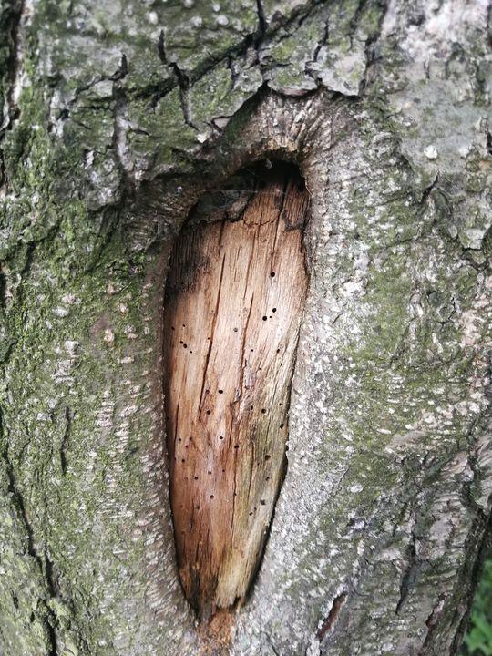 Tree eye - ARt KOz
