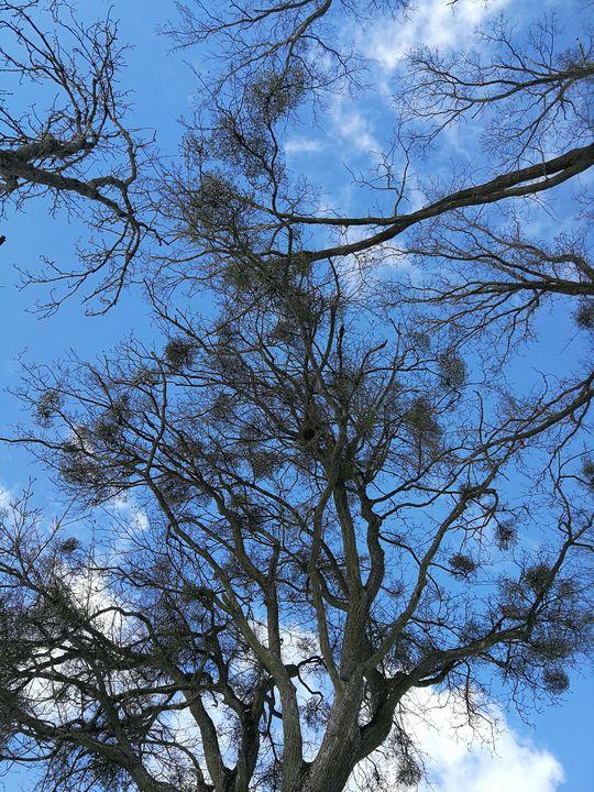 Crown of trees - ARt KOz
