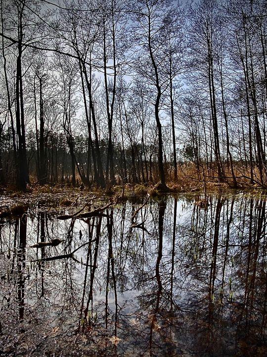 The rainforest - ARt KOz
