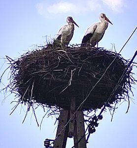 Storks BOCIANY