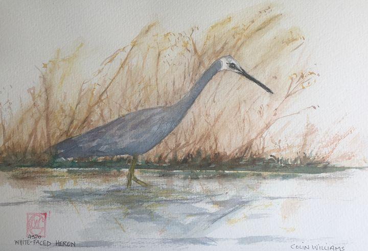 White-faced Heron (original) - Colin L. Williams