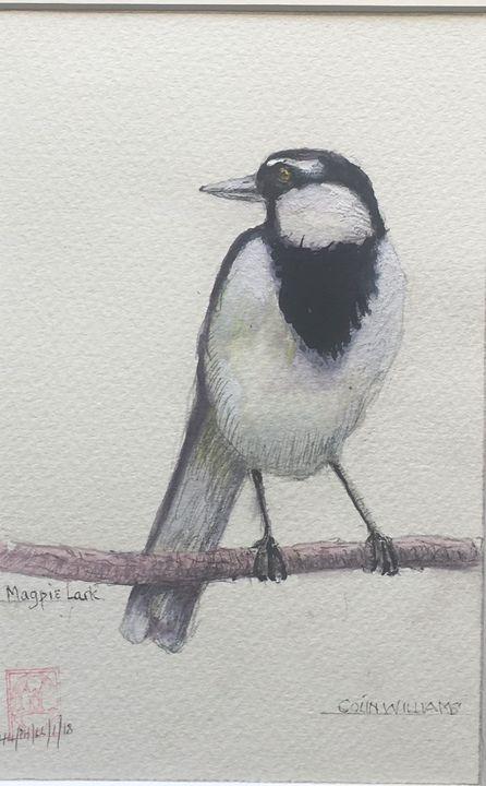 Australian Magpie Lark - Colin L. Williams