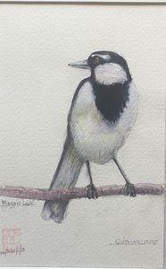 Australian Magpie Lark