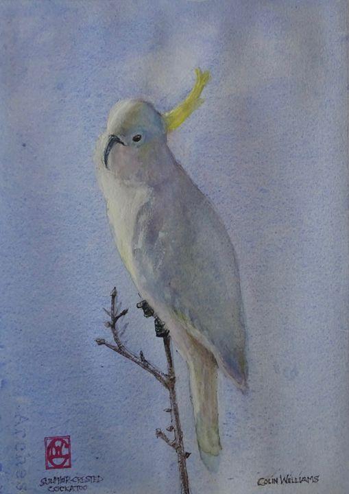 Sulphur-crested Cockatoo - Colin L. Williams