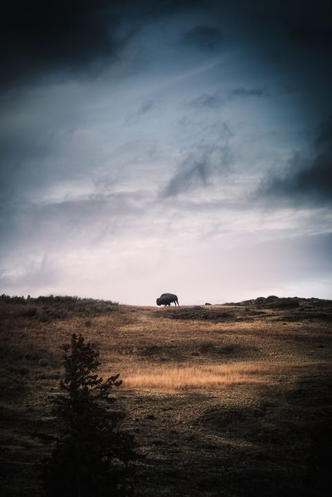 Lone Bison - Jeb McConnell
