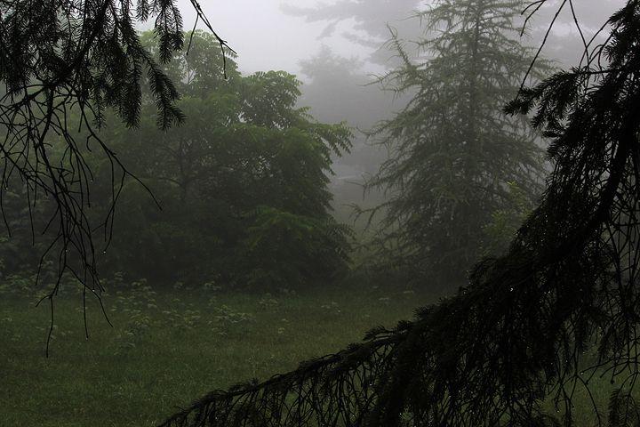 Foggy maze - luckazarts