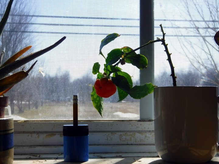 Pepper and sharpener - luckazarts