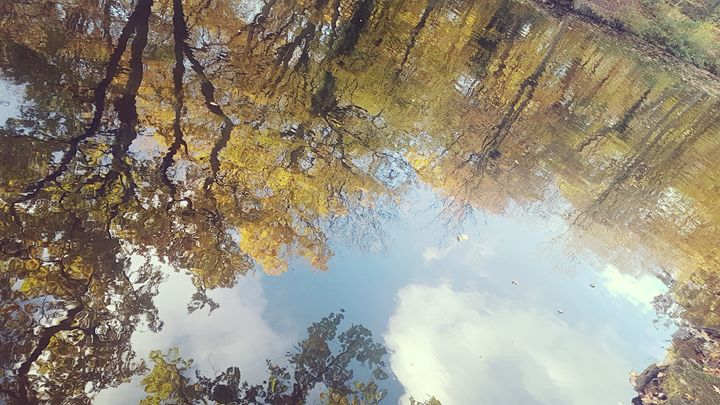Reflection of Autumn Trees - Melissa's Designs