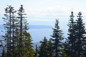 Canada trees