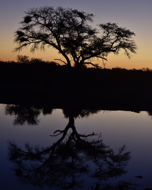 Watering hole at Madikwe Reserve - The Color Catcher