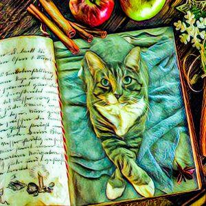 Bc cat 0293