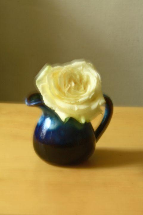 Still Life -White Rose- - Alexander Henry
