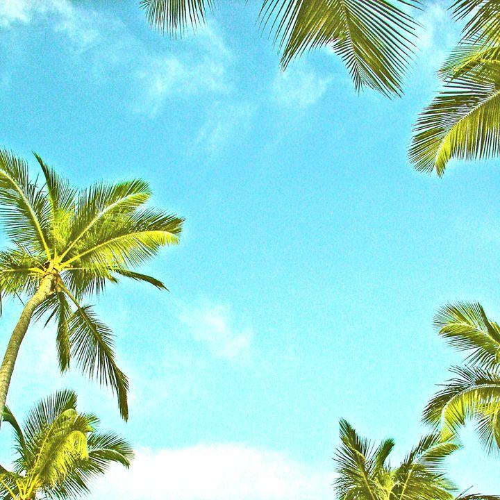 Palms - Alexander Henry