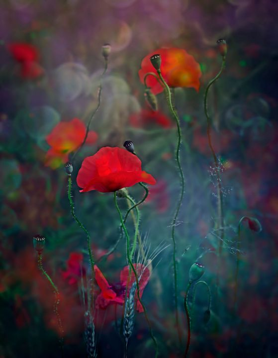 Magic Poppies - Beyond Reality