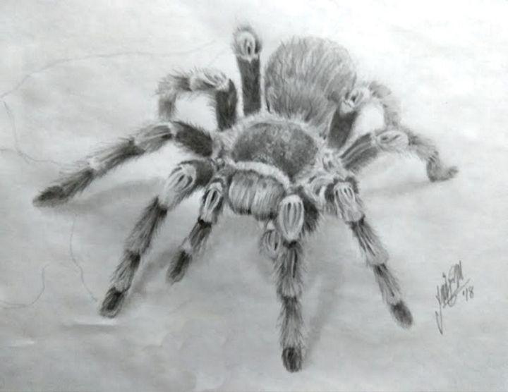 Tarantula - Tlachinoihuitl Yoe