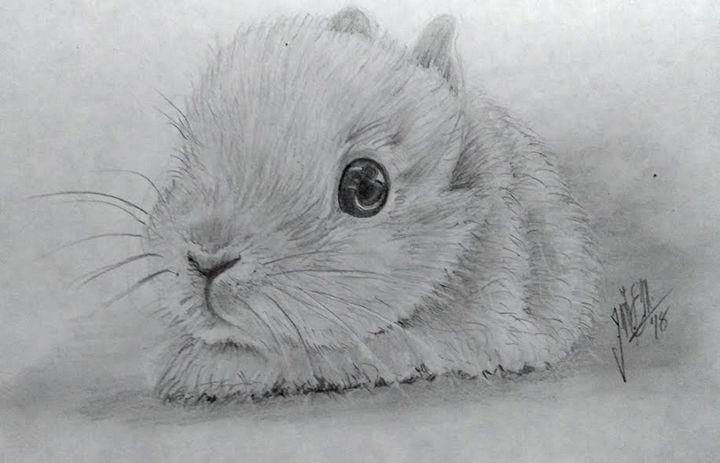 Baby Rabbit - Tlachinoihuitl Yoe