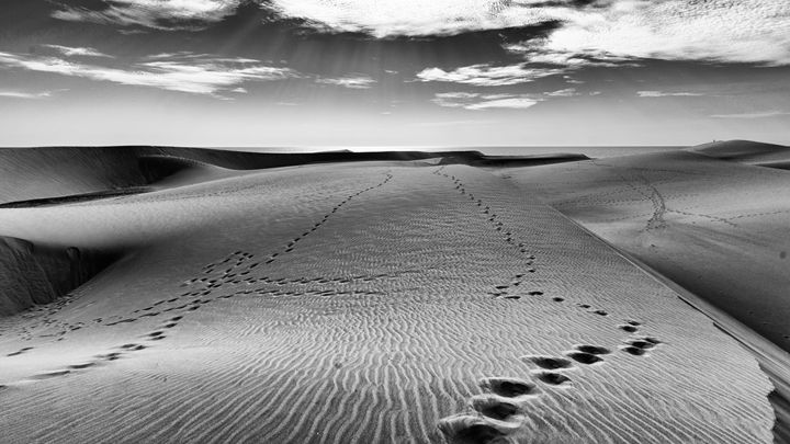 Footsteps on the Beach - Andy McGarry Photo
