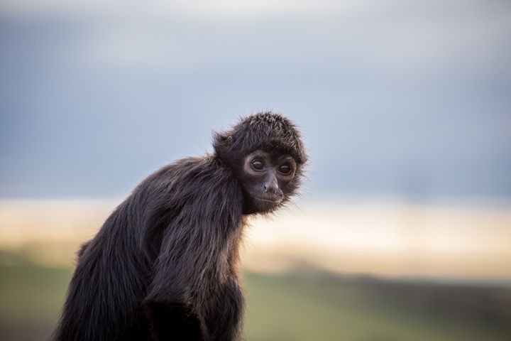 Monkey Portrait - Andy McGarry Photo