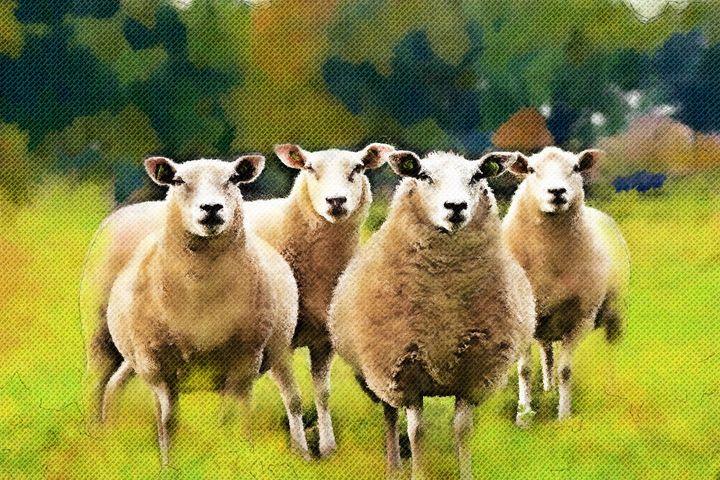 Sheep - Artists Korner