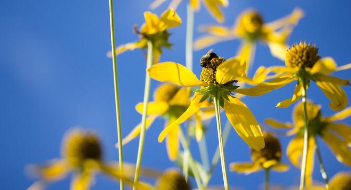 Bee in a Flower Forrest - Bryan's Art