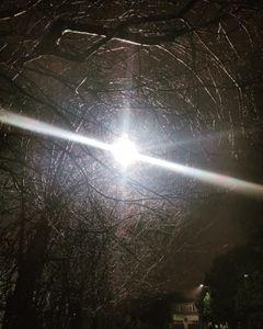 Streetlight in the trees.