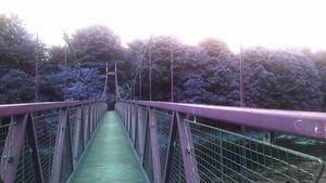 Purple Swinging Bridge