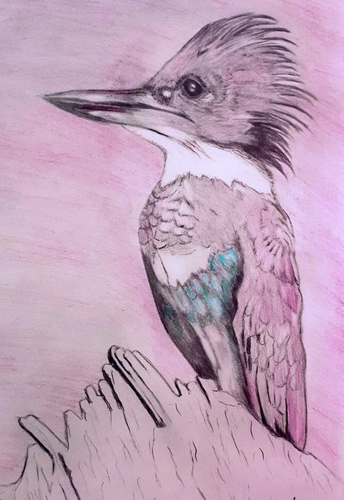 The Belted Kingfisher - Limitless Creativity by Ruthie