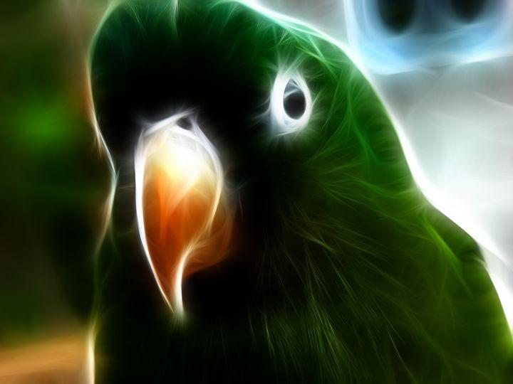 Parrot - Croag