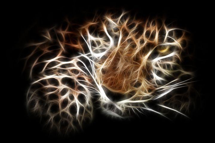 Cheetah - Croag