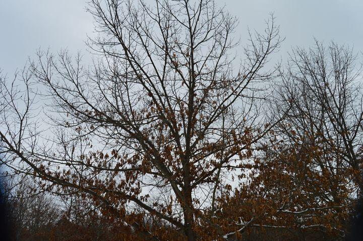 Soul Tree - Sam Glidewell