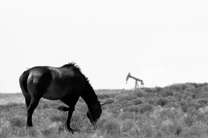 Wild Horse and Pumpjack - Jonathan P. Thompson