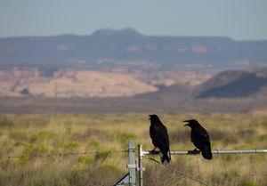 Ravens and the Bears Ears