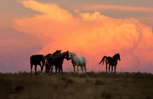 Wild Horses in Ute Country