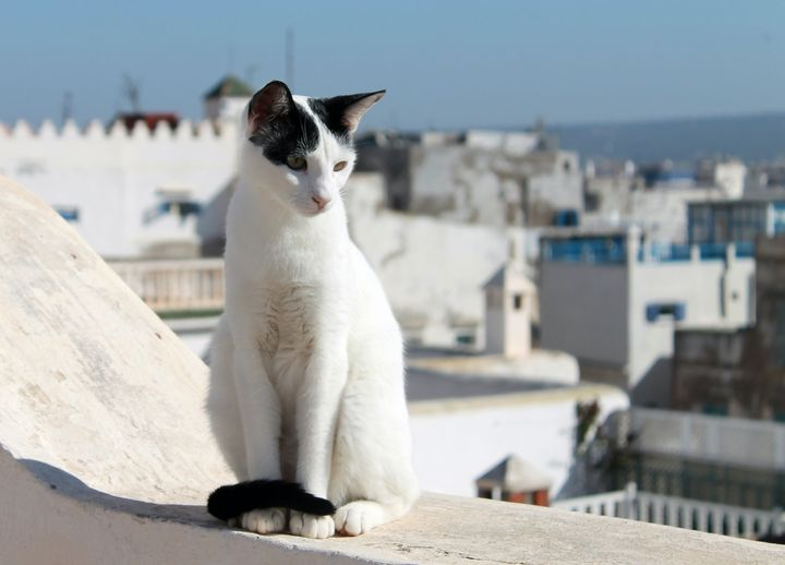 Essaouira Cat - Jonathan P. Thompson